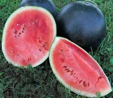 Sugar Baby Watermelon Seeds - 500 SEEDS