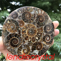 1pc Natural Ammonite fossil quartz crystal disk shell Plate Conch +Stand reiki