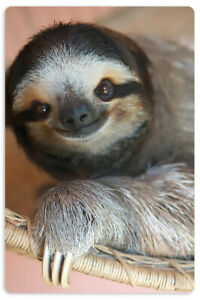 Sloth card - Cards Against Humanity - CAH - Rare collectable surprise gift
