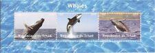 Chad - 2016 Balene su Francobolli - 3 Francobollo Strip - 3b-451