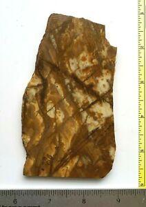 BROWN ZEBRA JASPER - Rock Slab (RS2150)