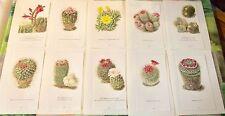 10 illustration Botanique  Walter Kuper Cactus Serpent Aporocactus