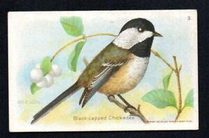 BLACK-CAPPED CHICKADEE 1936? 8TH SERIES ARM & HAMMER USEFUL BIRDS OF AMERICA #3