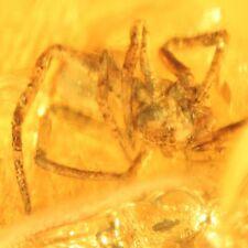 Araignée Insecte Fossile en Ambre de la Baltique +PHOTO GRATUITE ir140