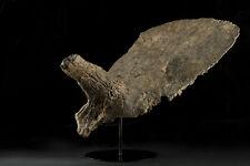 Rare Prehistorical Triceratops Horn, Dinosaur Fossil, Archeological Artifact