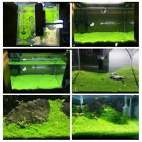 1000pcs Bulk Aquarium Mixed Grass Seeds Water Aquatic Fish Home PlantD Tank O4W5