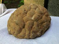 superbe pierre ancienne imitant un cerveau humain cabinet de curiosité