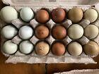 Rainbow Hatching Eggs- 6 Olive, 6 Marans, 6 Ameraucana