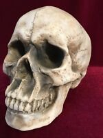 "Skull Decor Large 8""-Gothic Fantasy Home Decor Macabre FREE SHIPPING"