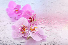 STUNNING PINK ORCHID FLOWERS CANVAS #798 QUALITY FLORAL PICTURE A1 WALL ART