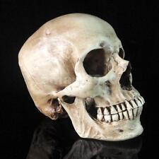 Resin Replica 1:1 Real Life Human Anatomy Skull Skeleton Medical Halloween Decor