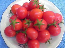Tomato Vegetable seeds Indoor Charm from Ukraine early
