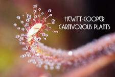 Carnivorous Plant Voucher for Ebay or Nursery