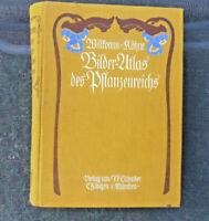 Atlas des Pflanzenreiches Willkomm - Köhne um 1880 - 1909