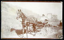 ***1900's HORSE BUGGY  ~ What A Beautiful Horse ! RPPC