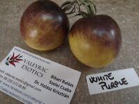 White Purple Tomate - 10+ Samen - Saatgut HONIGSÜßE RARITäT!