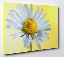"""Daisy Flower Water Drops Canvas Yellow Print Wall Art A1 20X30"""" inches"""