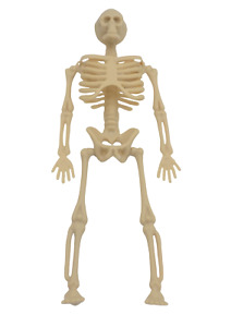 Dolls House Miniature Skeleton-medical-1:12 scale-halloween-accessories