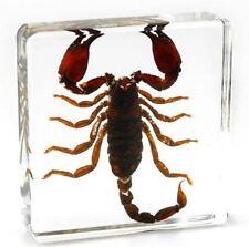 Más coleccionables de insectos