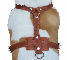 "Genuine Leather Dog Harness 33""-41"" chest Rottweiler Cane Corso German Shepherd"