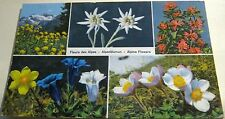 Switzerland Fleurs des Alpes Alpenblumen 8061 Steinhauer - posted 1965