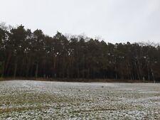 Waldgrundstück Wald Waldfläche 44000 m² nähe Rügland/Ansbach Mittelfranken