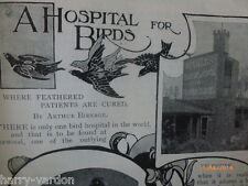 Bird Hospital Doctor Vale Veterinary Norwood London Victorian Old Article 1900