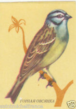 2. Bruant fou Emberiza cia - Rock Bunting IMAGE CARD MATCHBOX LABEL 60s