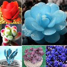 60pcs Seeds Rare Mini Succulents Potted Flower Seeds Home Office Decorative
