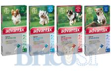 ADVANTIX Antiparassitario Spot-on per Cani 40 - 60Kg  4 Pipette