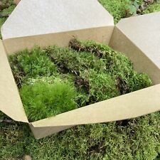 Live Assortment of Moss For Fairy Gardens, Terrarium Sustainably Harvested