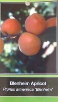 4'-5' live BLENHEIM APRICOT TREE Healthy Fruit Trees Natural Plant Home Garden