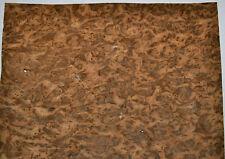 English Brown Oak Burl Raw Wood Veneer Sheet 12.5 x 19.5 inches 1/42nd J7681-18