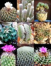 RARE TURBINICARPUS  MIX exotic mexican miniature cacti rare cactus seed 20 SEEDS