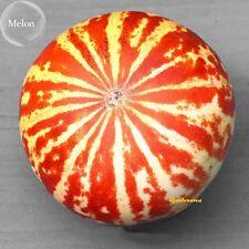 10 Graines de Melon Tigre Bio  ' Tigger Melon ' Organic seeds