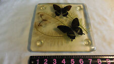 Acrylic Butterfly  Cutting Board - 7.5  X 7.5  Inches--Lethbridge Laboratories