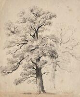 Unbekannter Künstler - Bäume / Studie - Bleistiftzeichnung - 1846