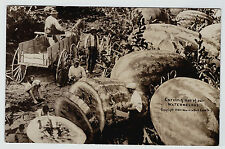 RARE Real Photo - Black African Americana Watermelons 1909 RPPC - Exaggerated