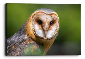 Barn Owl Green Animal Kingdom Bird Canvas Wall Art Picture Home Decor