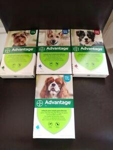 ADVANTAGE¹anti Puces chien fleas treatment 4 pipettes 1-40 kg XS-S-M-L-XL