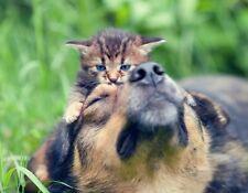 METAL FRIDGE MAGNET Kitten Sitting On Dog Friends Cat Kittens Dogs