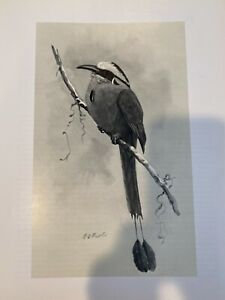 Louis Agassiz Fuertes & The Singular Beauty of Birds, Blue-Crowned Motmot Print