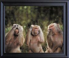 Monkeys Hear No Evil See No Evil Speak No Evil Wall Decor Black Framed (19x23)
