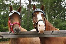 Horse Sun Visor  90% UV protection horse shade cap no ears eye protection great!
