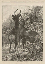 Deer On The Watch by Karl Bodmer Rare Antique Art Print