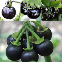 50pcs Rare Tomato Seeds Black Cherry Russian Heirloom Vegetable Fruit Seeds