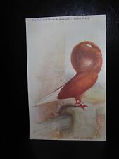 Aids To Amateurs Pigeons No 11 The Jacobin Postcard  Feathered World