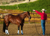 Clinton Anderson Colt Starting, Foal Training, Trick Training Groundwork Bundle