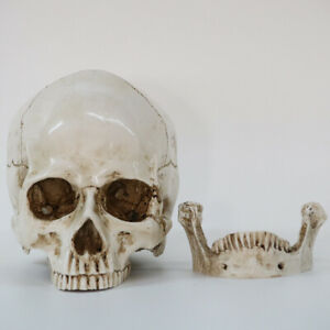 Statues Sculptures Resin Halloween Home Decor Decorative Craft Skull Size Mo AX