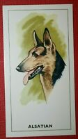 ALSATIAN   German Shepherd  Original 1963 Vintage Colour Card